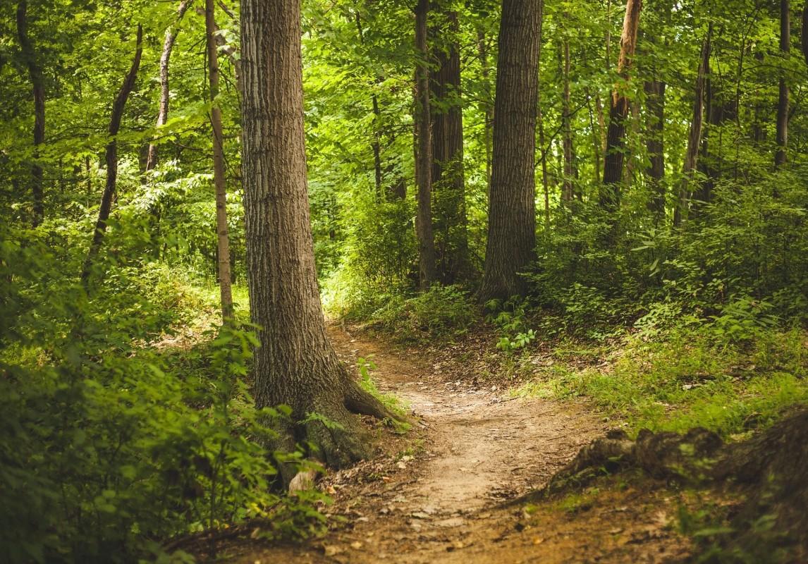 Maaginen metsä II alakoululaisille