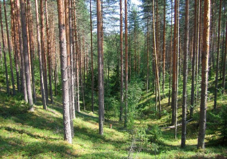 Savo-Karjalan AM-keskimatka & AM-yö -kilpailut